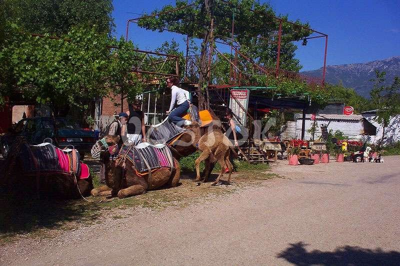 We are getting prepared for camel ride in Kayakoy
